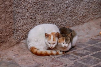 Marrakesh - Katzenpaar