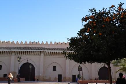 Marrakesh - Orangenbäume säumen die Straßen