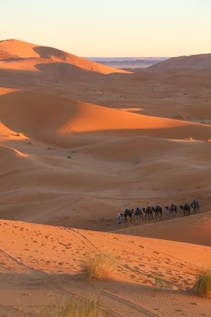 Sahara Tour - erste Sonnenstrahlen und unsere Kamele