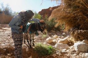 Sahara Tour - Eselchen in der Todra Schlucht