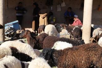 Sahara Tour - Markttag Rissani, Schafe werden hier auch verkauft