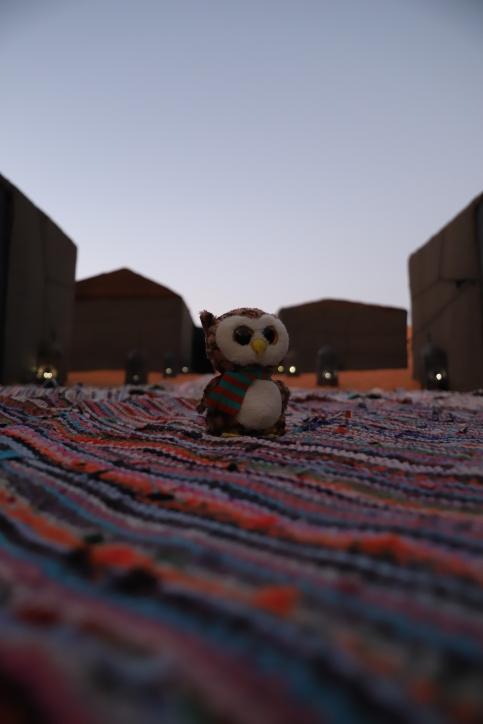 Sahara Tour - Unsere Reiseeule im Berber-Camp inmitten der Sahara