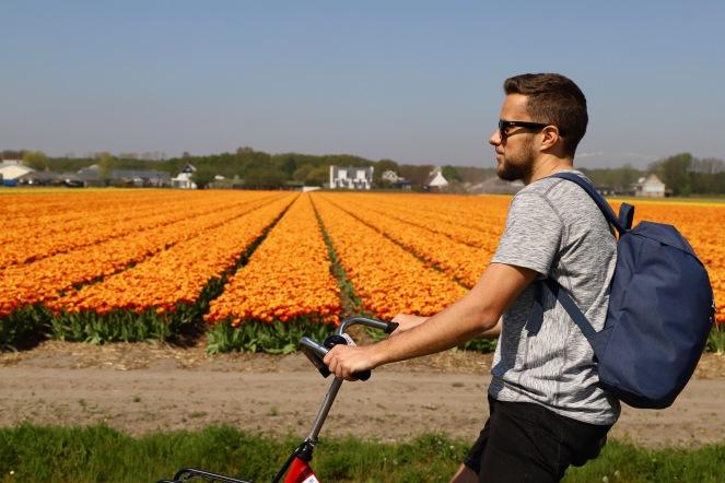 Radtour vorbei an den Tulpenfeldern