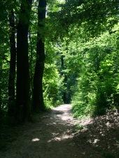 Riesiger Stadtwald in Ljublijana