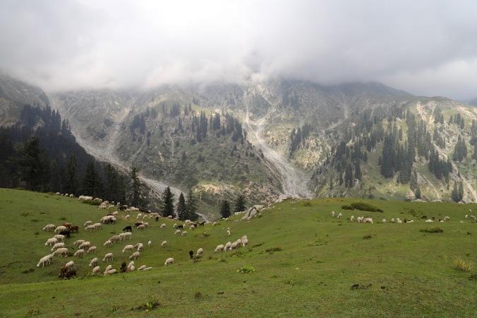 Umgebung rund um den Berg Gabin Jabba