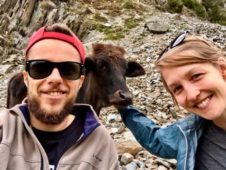 Wir zwei alleine mit ein paar freundlichen Kühen im Rakaposhi Basecamp